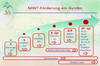 MINT am GymBo-Diagramm
